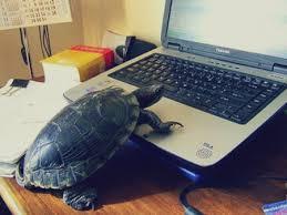 tartaruga no computador