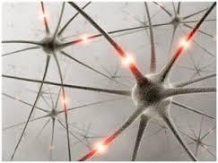 neuronio geral