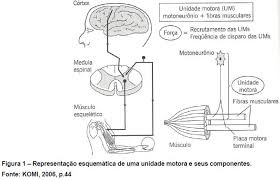 Unidade motora e seus componentes