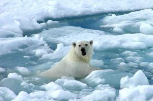 gelo e urso2