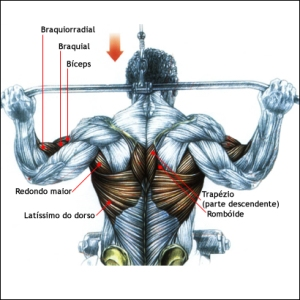 latissimo do dorso