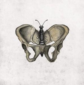 pelve borboleta