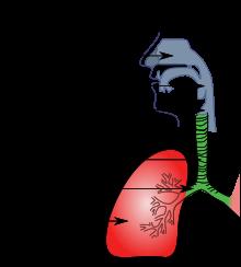 trato respiratorio
