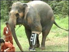 proteseelefante