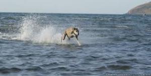 cachorro sobre a agua