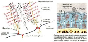Osteoartrose 02