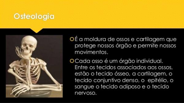 03-aula-anatomia-ssea-completa-2-638