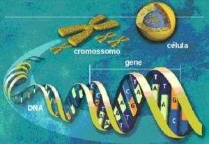 cromossomo