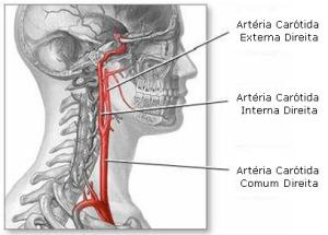 arteriassecundarias