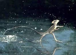 andando sobre a agua de verdade