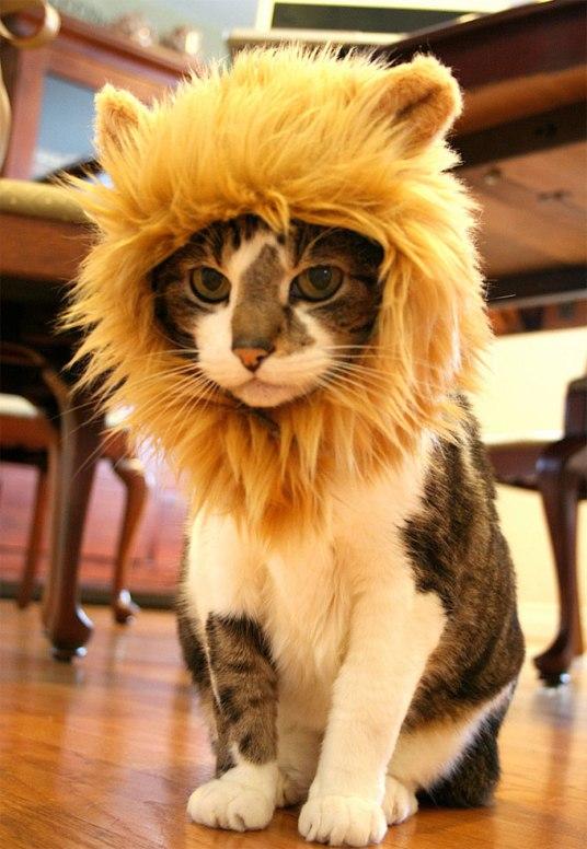 leao-gato