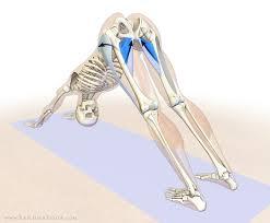 Musculos do quadril