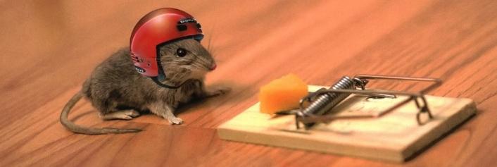 ratinho-tentacao
