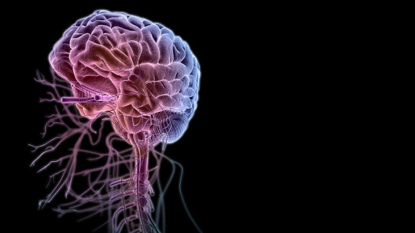 nervos-cranianos